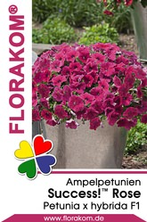 Ampelpetunien SUCCESS!™ Rose