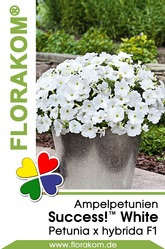 Ampelpetunien SUCCESS!™ White