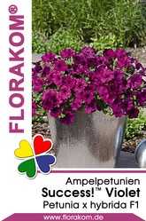 Ampelpetunien SUCCESS!™ Violet