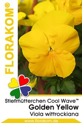 Ampelstiefmütterchen Cool Wave™ Golden Yellow