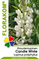 Lupinen Candle White