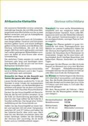 Afrikanische Kletterlilie Ruhmeskrone