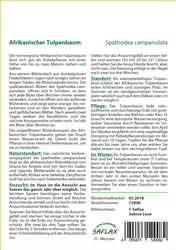 <hr>Afrikanischer Tulpenbaum <hr>Samen<hr>