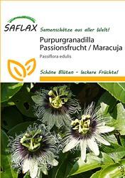 Purpurgranadilla Passionsblume