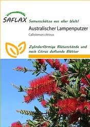 <hr>Australischer Lampenputzer <hr>Samen<hr>