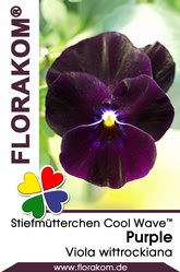 Ampelstiefmütterchen Cool Wave™ Purple