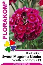 Bartnelken Sweet Magenta Bicolor