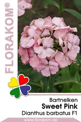 Bartnelken Sweet Pink