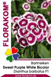 Bartnelken Sweet Pink Magic