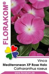 Vinca Mediterranean XP Rose Halo