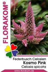 Federbusch Kosmo Pink - Celosien Samen