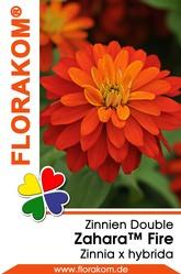 Zinnien Zahara™ Double Fire